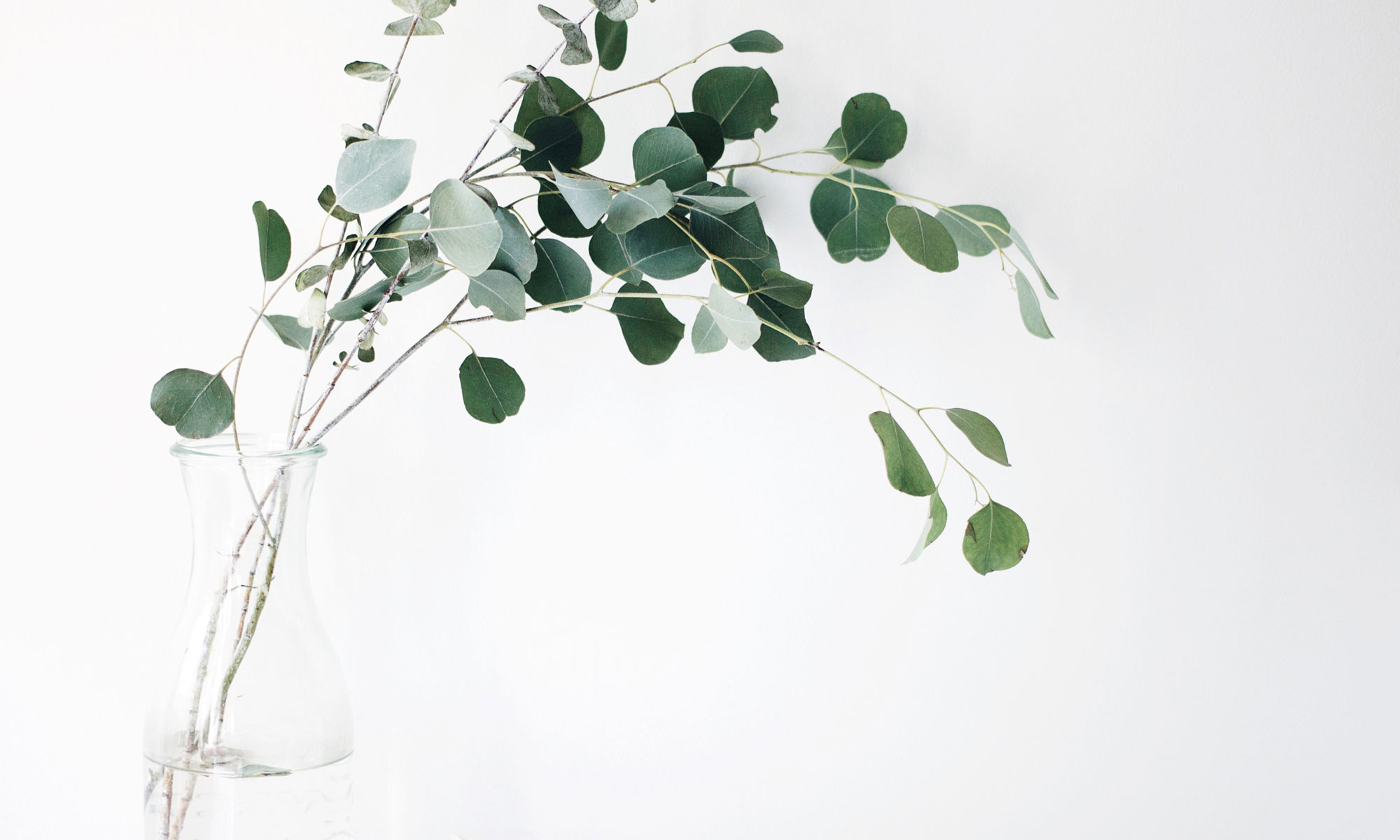 Eucalyptus stems in a glass jar